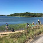 students explore the salt marsh by the road